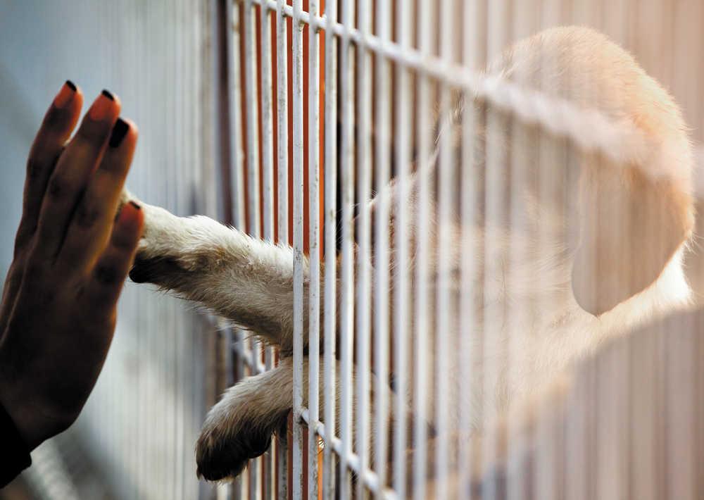 Aumentan los abandonos de mascotas